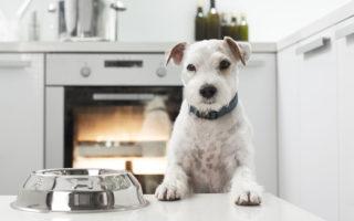 Croquettes pour chien : les pièges marketing