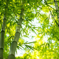Soins et cosmétiques : prenez la vie par le bambou