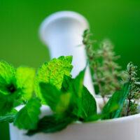 Plantes et santé : l'essentiel à savoir