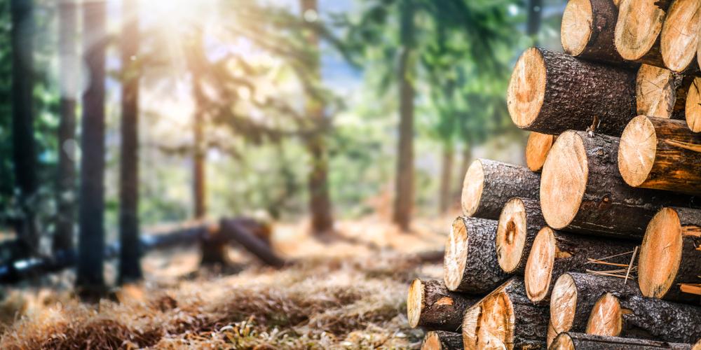 tronc-arbres