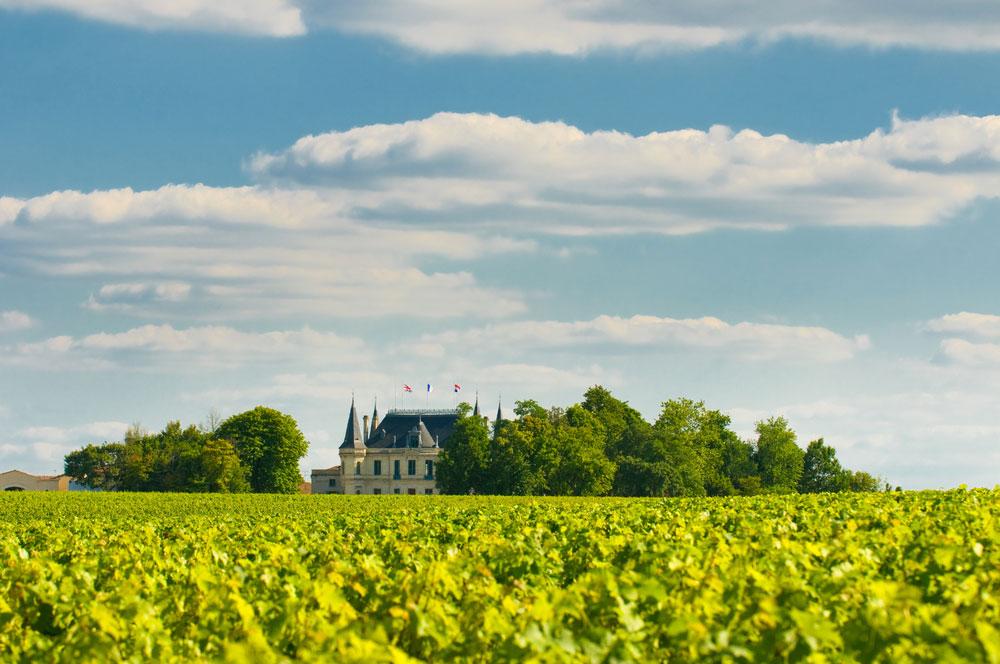 vignoble-chateau-margaux