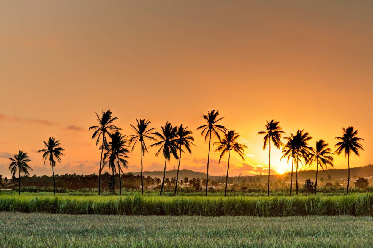 île de la Réunion et île Maurice